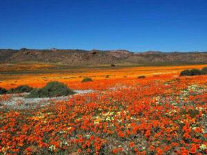 Kakamas Activities | Palmhof Chalets | Flower Tours