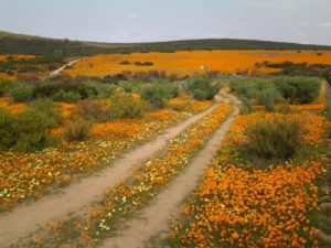 Namaqualand Tours 2017